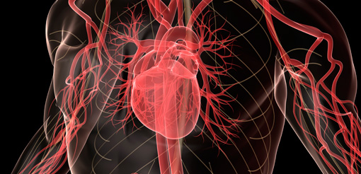 Biomarkers identified to help diagnose heart condition
