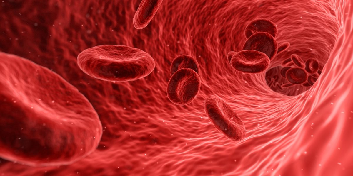3d rendering of red blood cells in vein