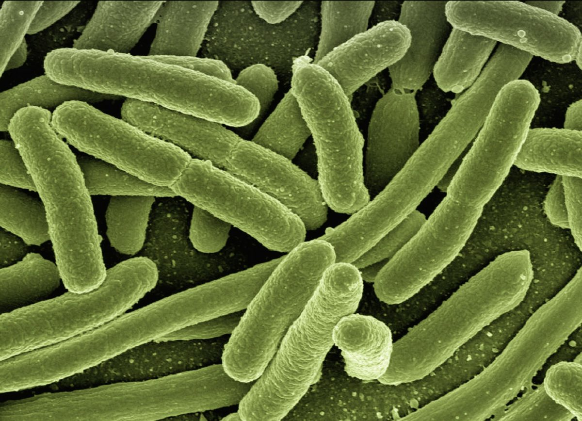 Taking over the human gut – scientists unlock the secrets of e. coli clones