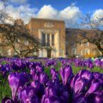 Birmingham Medical School on a spring day
