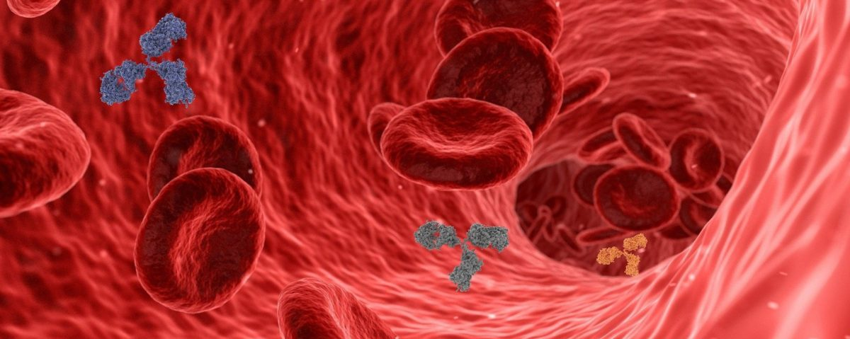 BMI, age and ethnicity associated with higher COVID-19 antibody levels