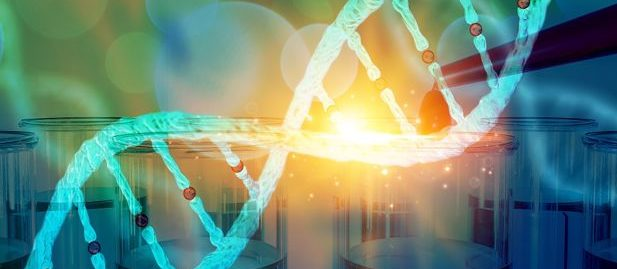 Higher rates of DNA mutation alone are not to blame for age-related disease